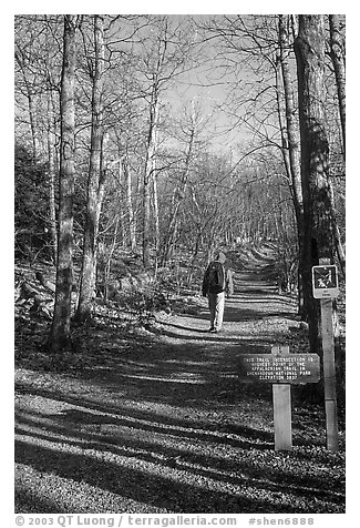 Backpacker on the Appalachian Trail. Shenandoah National Park (black and white)