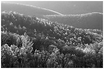 Trees and ridgelines in the spring, late afternoon. Shenandoah National Park ( black and white)