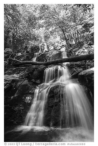 Dark Hollow Falls. Shenandoah National Park (black and white)