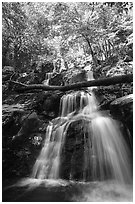 Dark Hollow Falls. Shenandoah National Park ( black and white)
