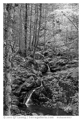 Cascades in fall, Hogcamp Branch of the Rose River. Shenandoah National Park (black and white)