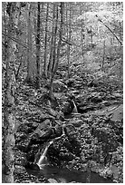 Cascades in fall, Hogcamp Branch of the Rose River. Shenandoah National Park ( black and white)