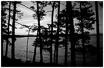 Pine trees silhouettes at sunset, Woodenfrog. Voyageurs National Park, Minnesota, USA. (black and white)