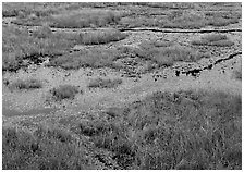 Grasses and marsh. Voyageurs National Park ( black and white)