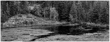Marsh and north woods forest. Voyageurs National Park (Panoramic black and white)