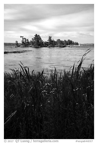 Grasses, wildflowers, and islet, Sand Point Lake. Voyageurs National Park (black and white)