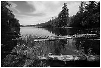 Fallen trees and Beast Lake. Voyageurs National Park ( black and white)