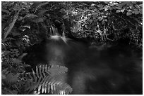 Ferns and stream cascade. Voyageurs National Park ( black and white)