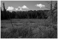 Marshy area. Voyageurs National Park ( black and white)