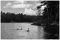 Loons, Namakan Lake. Voyageurs National Park ( black and white)