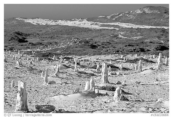 Ghost forest formed by caliche sand castings of plant roots and trunks, San Miguel Island. Channel Islands National Park (black and white)