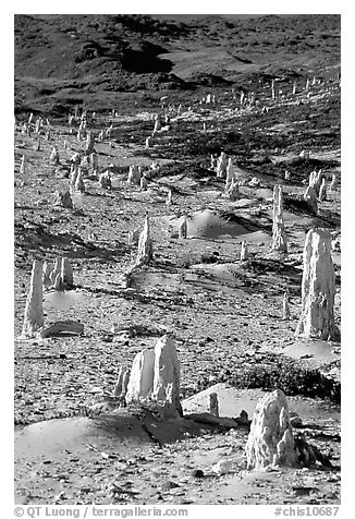 Ghost forest of caliche sand castings , San Miguel Island. Channel Islands National Park (black and white)