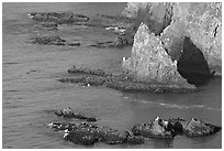 Rocky shoreline of Middle Anacapa Island. Channel Islands National Park ( black and white)