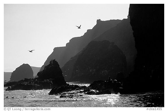 Steep cliffs, East Anacapa. Channel Islands National Park (black and white)
