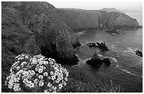 Coreopsis and Cathedral Cove, Anacapa. Channel Islands National Park, California, USA. (black and white)