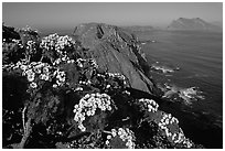 Coreopsis and island chain from Inspiration Point, morning, Anacapa. Channel Islands National Park ( black and white)