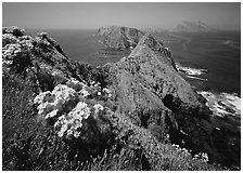 Coreopsis and chain of islands, Inspiration Point, Anacapa Island. Channel Islands National Park ( black and white)