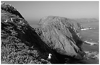 Western seagulls near Inspiration Point, morning, Anacapa. Channel Islands National Park ( black and white)