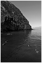 Scuba divers in cove below cliffs, Annacapa island. Channel Islands National Park, California, USA. (black and white)