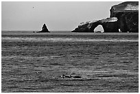 Dolphins and Arch Rock. Channel Islands National Park ( black and white)