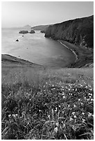 Wild Morning Glories and bay at sunrise, Scorpion Anchorage, Santa Cruz Island. Channel Islands National Park, California, USA. (black and white)