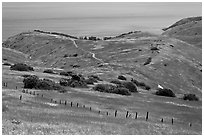 Grasslands in the spring, fence and ocean, Santa Cruz Island. Channel Islands National Park ( black and white)