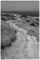 Winding dirt road and ocean, Santa Cruz Island. Channel Islands National Park ( black and white)