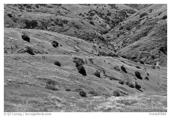 Scorpion Canyon in the spring, Santa Cruz Island. Channel Islands National Park (black and white)