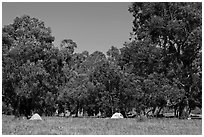 Campground in Scorpion Canyon, Santa Cruz Island. Channel Islands National Park ( black and white)