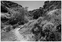 Cherry Canyon Trail, Santa Rosa Island. Channel Islands National Park ( black and white)
