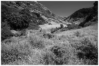 Cherry Canyon, Santa Rosa Island. Channel Islands National Park ( black and white)