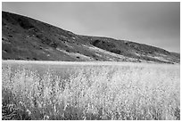 Grasses and hills, Santa Rosa Island. Channel Islands National Park ( black and white)