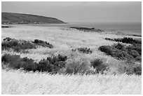 Golden grasses and Bechers Bay, Santa Rosa Island. Channel Islands National Park ( black and white)