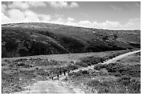 Hikers on road, Santa Rosa Island. Channel Islands National Park ( black and white)