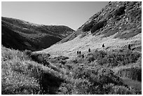 Hikers, Lobo Canyon, Santa Rosa Island. Channel Islands National Park ( black and white)