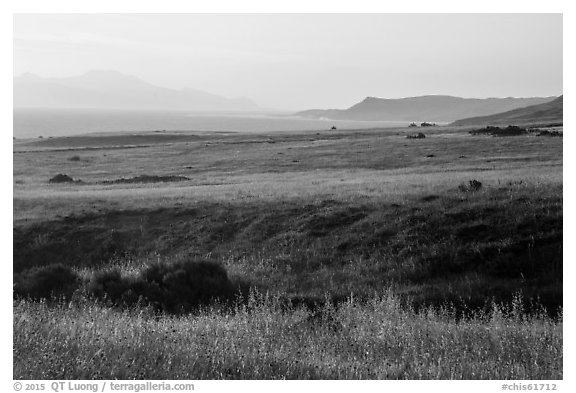 Grasses, Skunk Point, and Santa Cruz Island, sunrise, Santa Rosa Island. Channel Islands National Park (black and white)