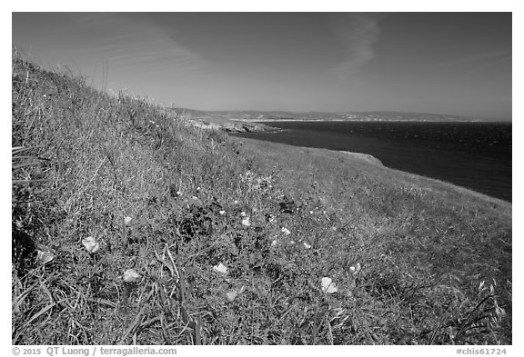 Poppies and grasses near Black Point, Santa Rosa Island. Channel Islands National Park (black and white)