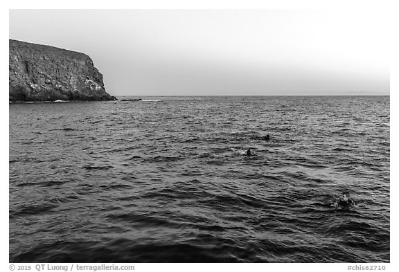 Divers surface at dawn, Santa Barbara Island. Channel Islands National Park (black and white)