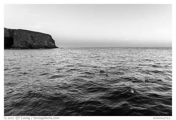 Seabirds at dawn, Santa Barbara Island. Channel Islands National Park (black and white)