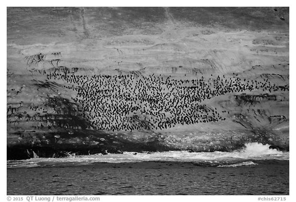 Cormorant colony at sunrise, Santa Barbara Island. Channel Islands National Park (black and white)