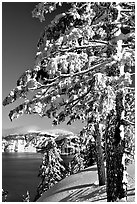 Trees framing  lake in winter. Crater Lake National Park ( black and white)