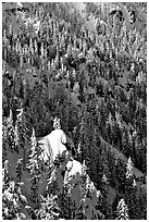Pine forest on slope in winter. Crater Lake National Park ( black and white)