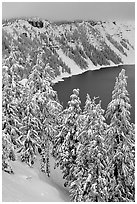 Trees and Lake rim in winter. Crater Lake National Park ( black and white)