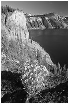 Sage flower and cliff. Crater Lake National Park ( black and white)