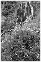 Vidae Falls and wildflowers. Crater Lake National Park ( black and white)