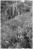 Wildflowers and Vidae Falls. Crater Lake National Park, Oregon, USA. (black and white)
