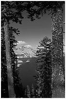 Lake seen between pine trees. Crater Lake National Park ( black and white)