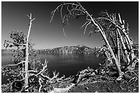 Lake and Mount Scott framed by Whitebark pines on top of Wizard Island cinder cone. Crater Lake National Park ( black and white)