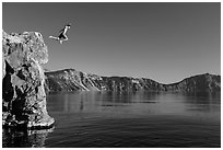 Twenty-five foot jump into more than eighty feet of water. Crater Lake National Park ( black and white)
