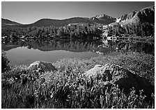 Wildflowers and Woods Lake, morning. Kings Canyon National Park ( black and white)